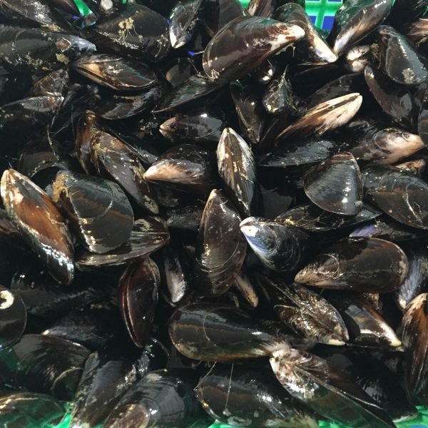 moules grosses